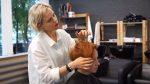 Стрижка ПИКСИ (короткая женская стрижка) с длинной челкой. Салон красоты Артема Любимова.